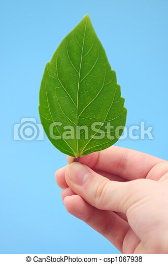 Hand holding green leaf - csp1067938
