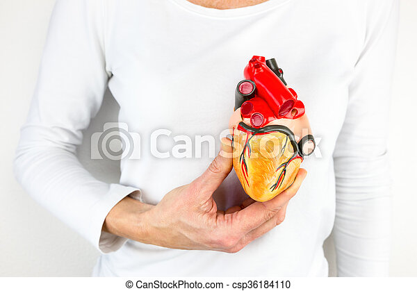 Hand holding human heart model in front of chest - csp36184110