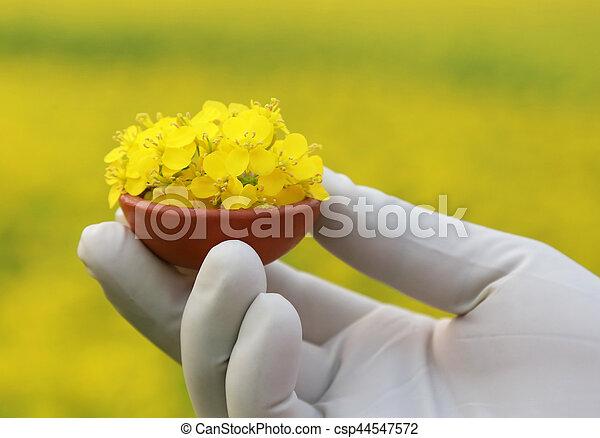 Hand holding mustard flowers - csp44547572