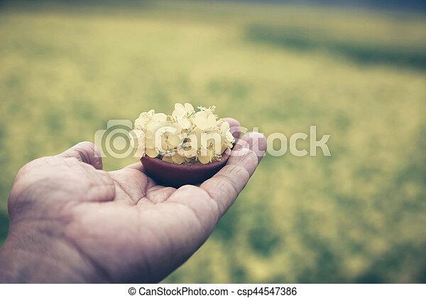 Hand holding mustard flowers - csp44547386