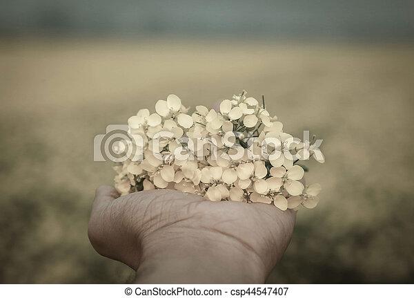 Hand holding mustard flowers - csp44547407