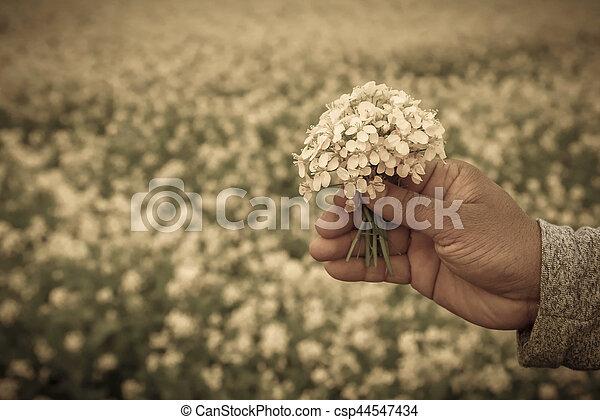 Hand holding mustard flowers - csp44547434