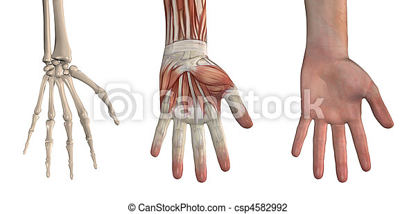 Hand Overlays - csp4582992