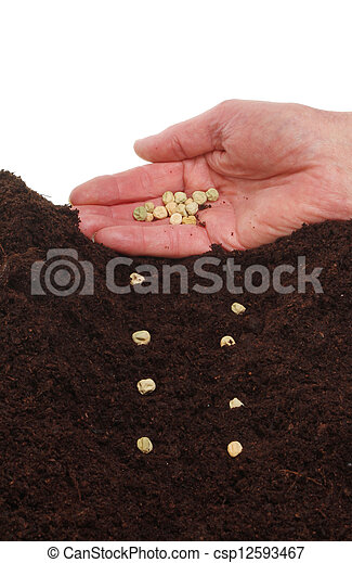 Hand planting seeds - csp12593467
