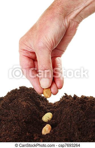 Hand planting seeds - csp7693264