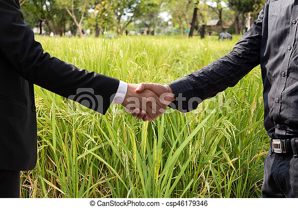 Conceptual hand shaking agreement of businessman and agriculture on rice field