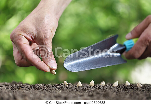 hand sowing seeds in the vegetable garden soil, close up with tool on green background - csp49649688