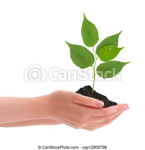 handen, vasthouden, jonge plant - csp12809798
