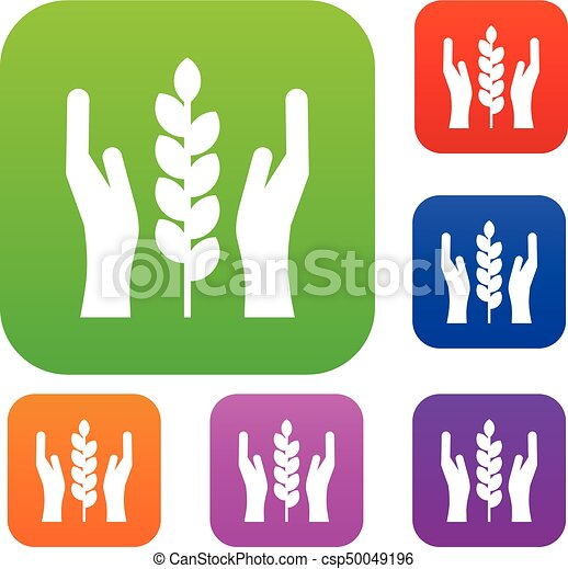 Hands and ear of wheat set collection - csp50049196