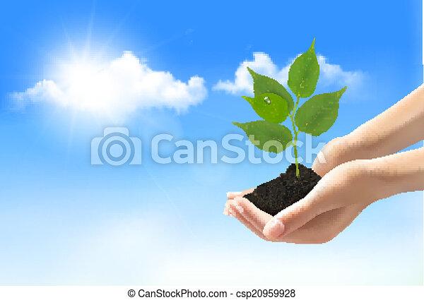 Hands holding a young plant. Vector. - csp20959928