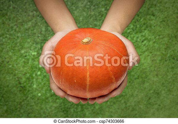 Hands holding pumpkin - csp74303666