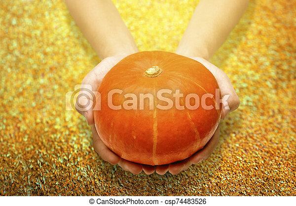 Hands holding pumpkin - csp74483526