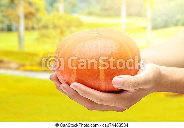 Hands holding pumpkin - csp74483534