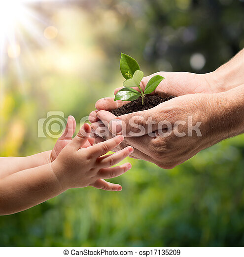 hands of a child taking a plant - csp17135209