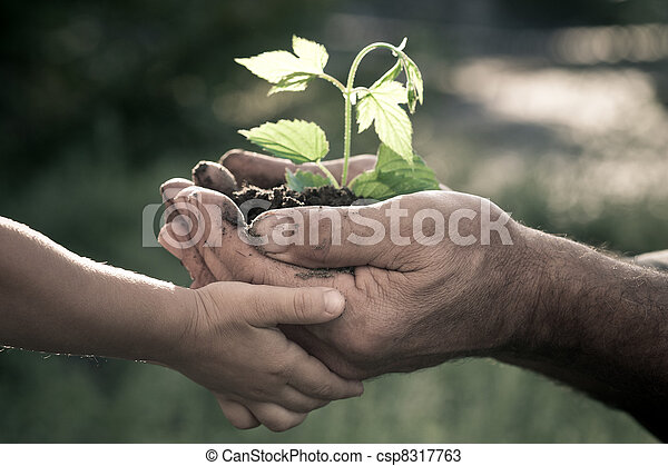 Hands of elderly man and baby holding a plant - csp8317763