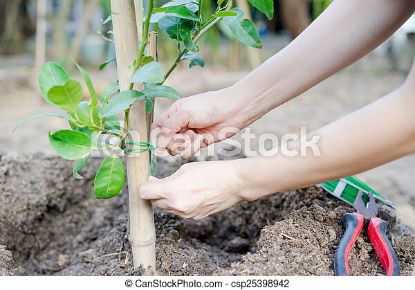 hands planting a tree  - csp25398942