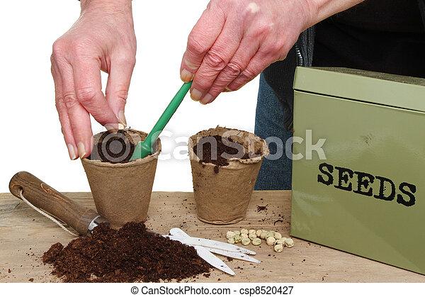 Hands planting seeds - csp8520427