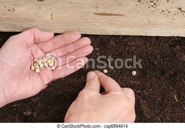 Hands planting seeds - csp6894614