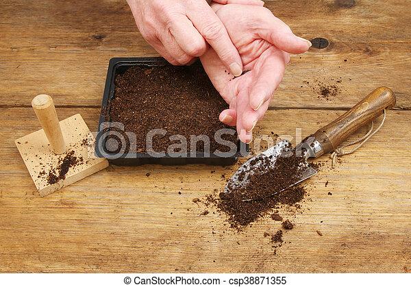 Hands sowing seeds - csp38871355