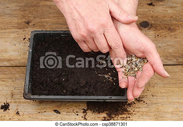 Hands sowing seeds - csp38871301