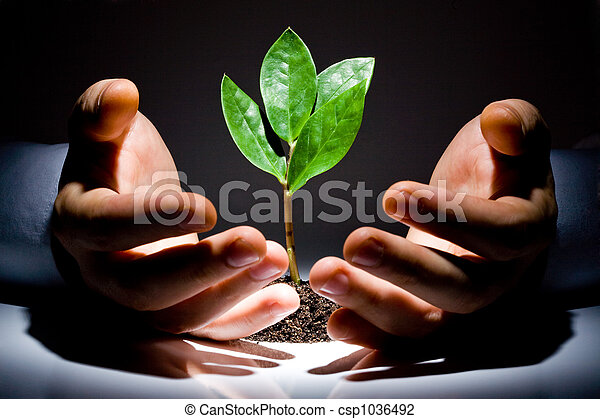 Hands with plant  - csp1036492