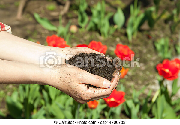 hands with soil - csp14700783