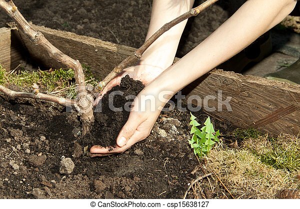 hands with soil - csp15638127