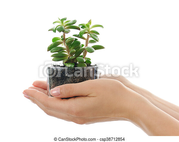hands with succulent - csp38712854