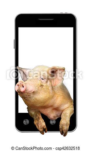 handy schwein