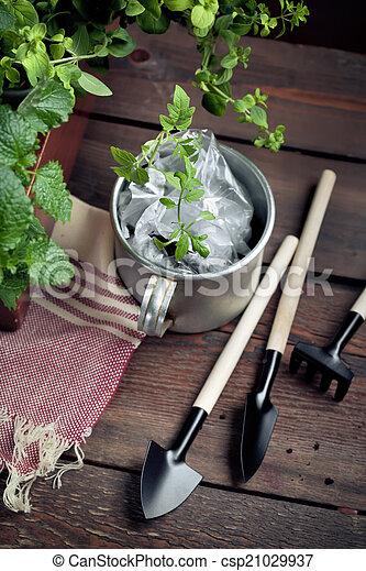 hangar, outils, jardin, pot, seedlings - csp21029937