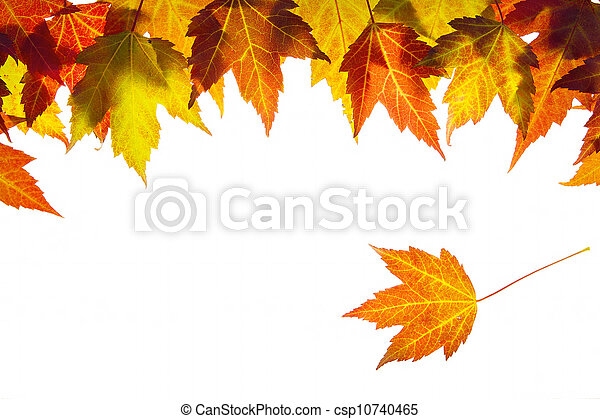 Hanging Fall Maple Leaves Border - csp10740465