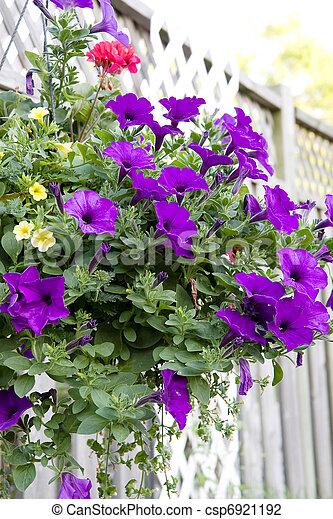 hanging flower basket - csp6921192