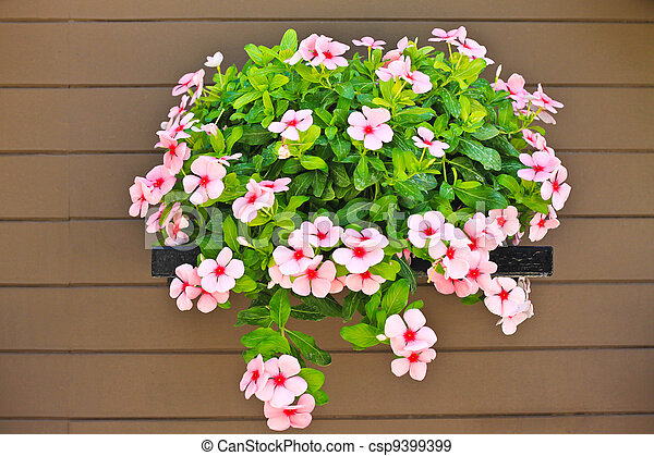 Hanging flower on wood wall - csp9399399