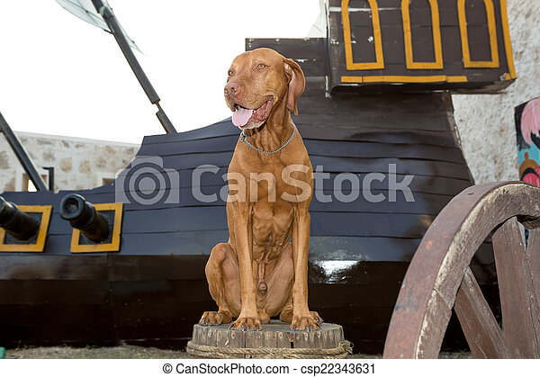 happ sitting on a barrely dog - csp22343631