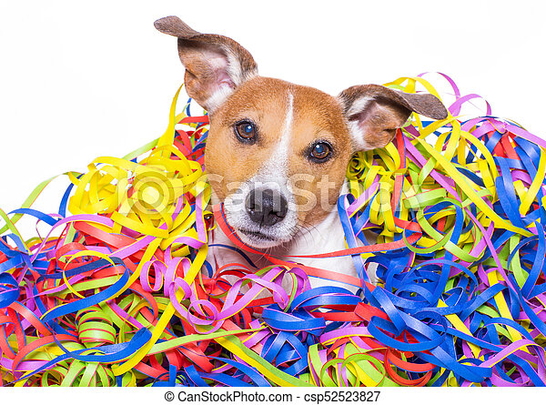 Happy Birthday Dog Celeberation Funny Jack Russell Dog Having Fun And A Party With Serpentine Streamers For Birthday Or