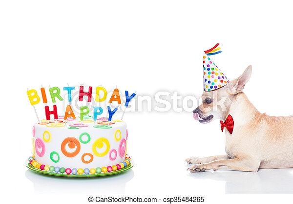 Happy Birthday Dog Chihuahua Hungry For A Cake