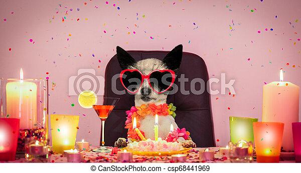 happy birthday dog - csp68441969