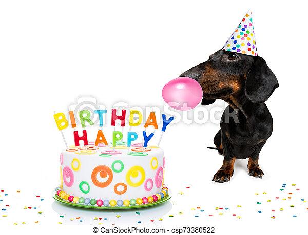 happy birthday dog - csp73380522