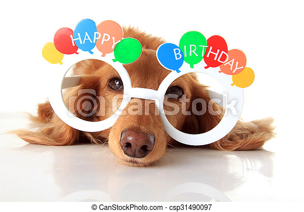Happy Birthday dog - csp31490097