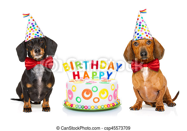 Happy Birthday Dog Couple Of Two Dachshund Or Sausage Dogs Hungry