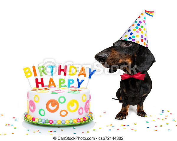 Happy Birthday Dog Dachshund Or Sausage Dog Hungry For A Happy Birthday Cake With Candles Wearing Red Tie And Party Hat