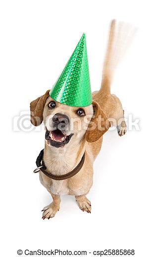 Happy Birthday Dog Wagging Tail A Cute Young Chiweenie Dachshund