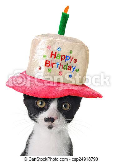 Happy Birthday kitten - csp24918790