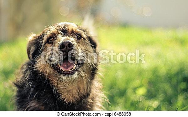 happy dog in green field - csp16488058