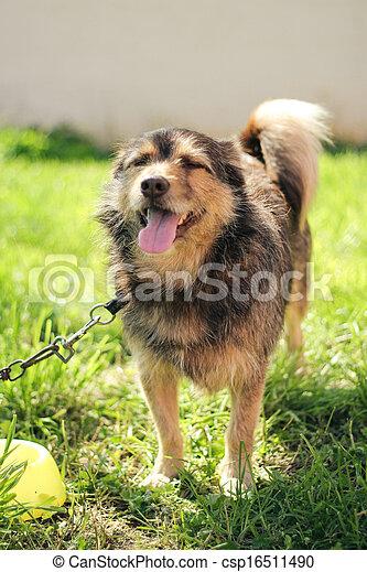 happy dog in green field - csp16511490