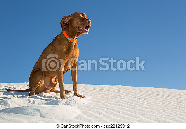 happy dog outdoors sitting in white sand - csp22123312
