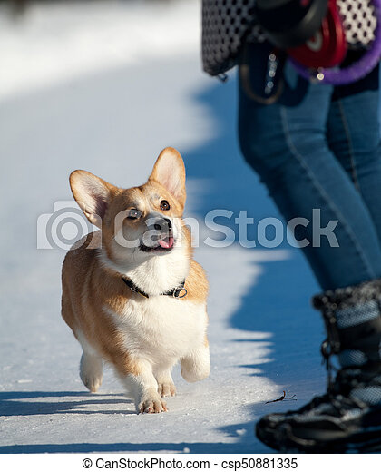 happy dog with owner on a walk - csp50881335