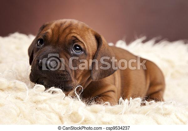 happy doggy - csp9534237