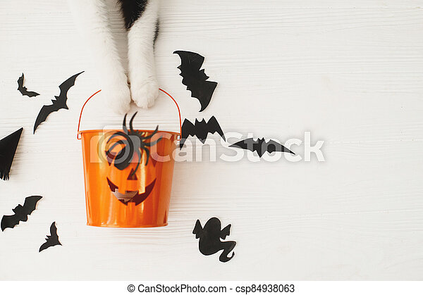 Happy Halloween! Cat paws holding Jack o lantern candy bucket on white background with bats, celebrating halloween at home. Top view with space for text. - csp84938063