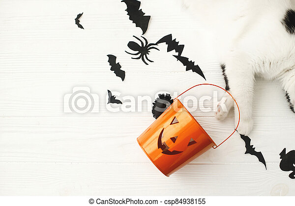 Happy Halloween! Cat paws holding Jack o lantern candy bucket on white background with bats, celebrating halloween at home. Top view with space for text. - csp84938155